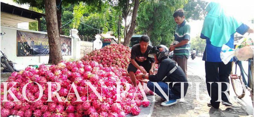 PKL yang berjualan buah naga di jalur pantura Kota Kraksaan dianggap cukup mengganggu karena meluber sampai bahu jalan. (Abdul Jalil/Koran Pantura)